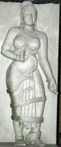 Urvashi creeper